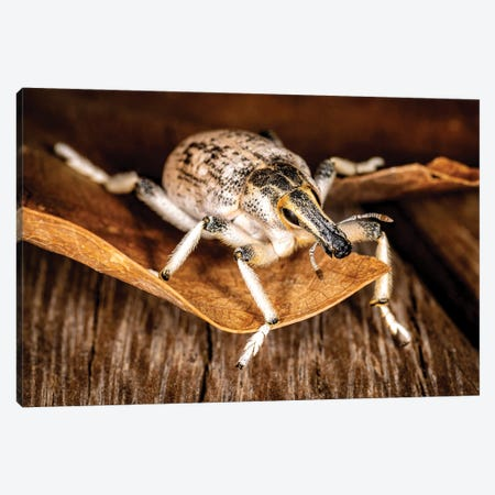 Longface Bug Canvas Print #NRV316} by Nik Rave Art Print