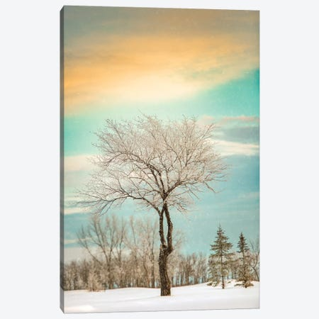 Lonely Tree Covered By Snow Canvas Print #NRV31} by Nik Rave Canvas Print