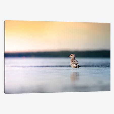 Seagull Facing Sun Canvas Print #NRV323} by Nik Rave Canvas Art Print