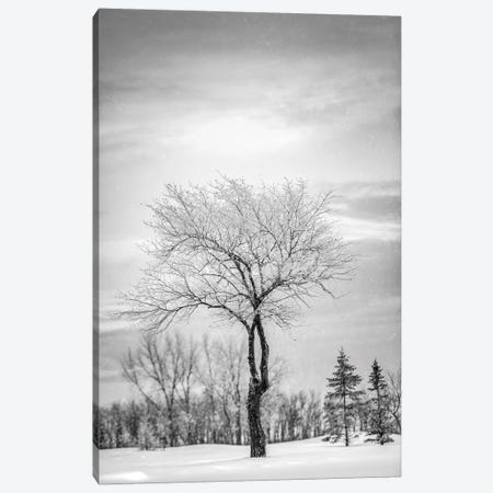 Lonely Tree Covered By Snow In Black And White Canvas Print #NRV32} by Nik Rave Canvas Print
