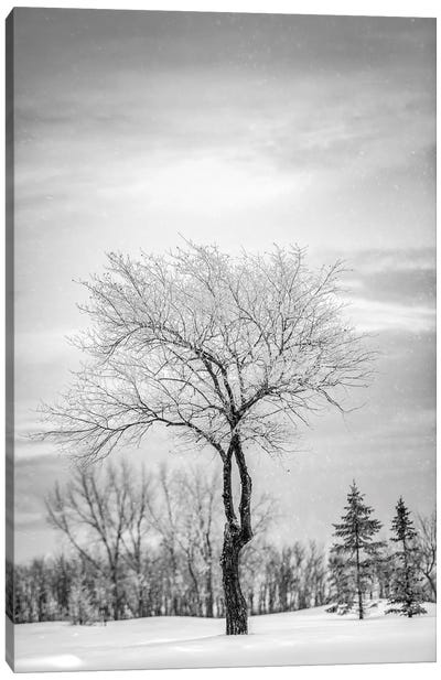 Lonely Tree Covered By Snow In Black And White Canvas Art Print