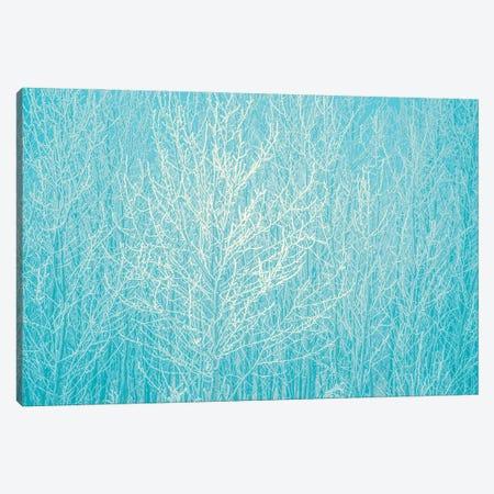 Blue Hoarfrost Canvas Print #NRV332} by Nik Rave Canvas Wall Art