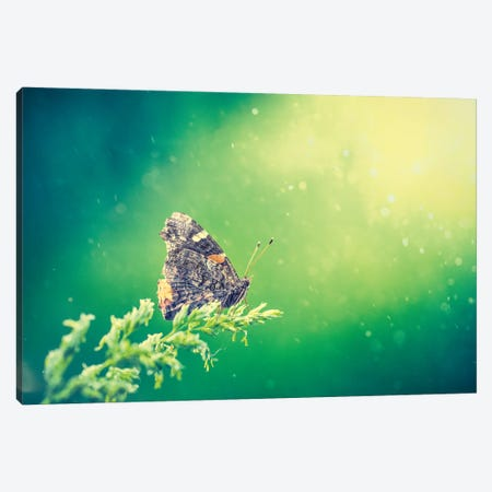 Butterfly At The Beam Of Sun Canvas Print #NRV333} by Nik Rave Canvas Art