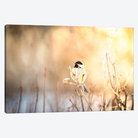 Bird At Sunny Winter Snowfall Canvas Print #NRV334} by Nik Rave Art Print
