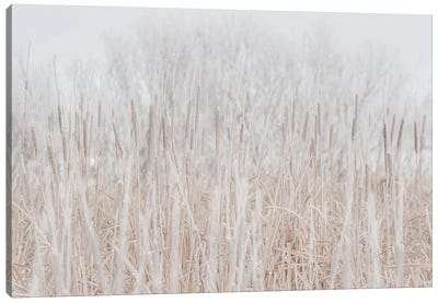 Cattails Hoarfrost With Snow Canvas Art Print