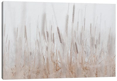 Cattails Hoarfrost Painting Canvas Art Print