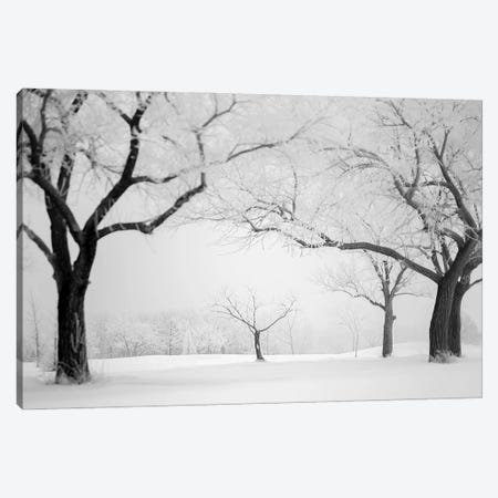 Hoarfrost Small Trees Framed By Big Trees Canvas Print #NRV342} by Nik Rave Canvas Print