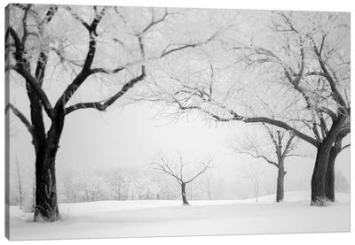 Hoarfrost Small Trees Framed By Big Trees Canvas Art Print
