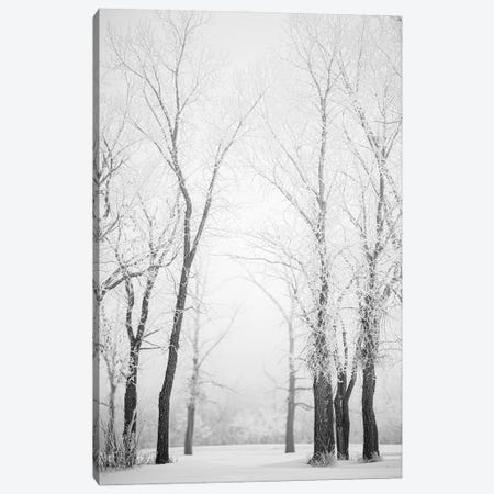 Hoarfrost Trees Path Canvas Print #NRV343} by Nik Rave Canvas Print