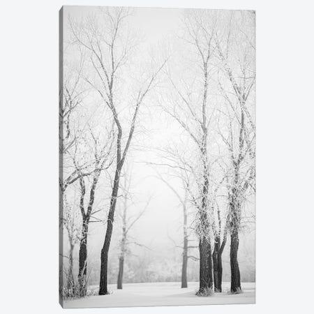 Hoarfrost Trees Path Canvas Print #NRV343} by Nik Rave Canvas Print