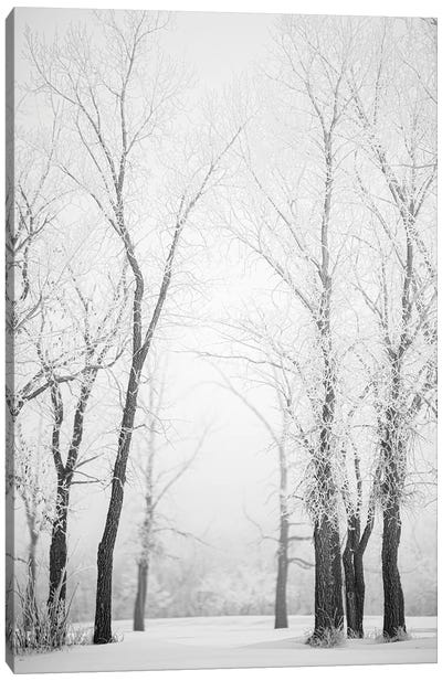 Hoarfrost Trees Path Canvas Art Print