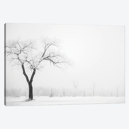 Hoarfrost Lonely Trees Canvas Print #NRV344} by Nik Rave Canvas Artwork