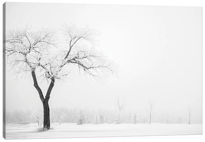 Hoarfrost Lonely Trees Canvas Art Print