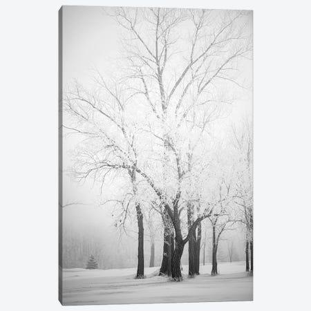 Hoarfrost Trees Canvas Print #NRV349} by Nik Rave Art Print