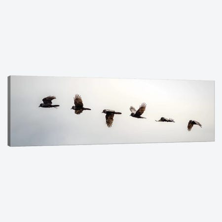 Equilibrium: Sequential Shoot Of A Flying Raven Canvas Print #NRV34} by Nik Rave Canvas Art