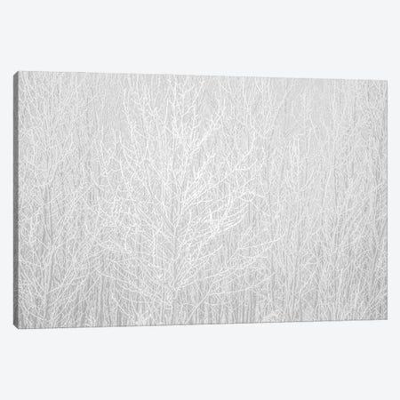 Hoarfrost White Canvas Print #NRV350} by Nik Rave Canvas Art