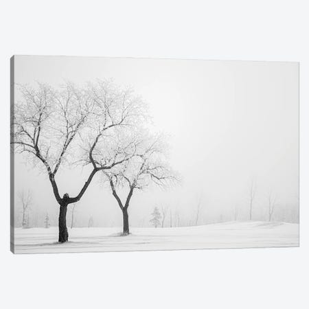 Two Hoarfrost Trees Canvas Print #NRV351} by Nik Rave Canvas Wall Art