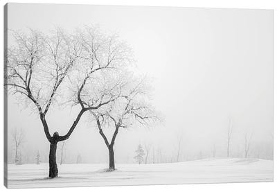 Two Hoarfrost Trees Canvas Art Print