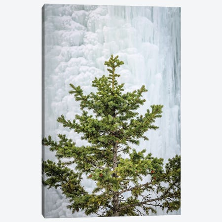 Pine At The Frozen Waterfall Canvas Print #NRV358} by Nik Rave Canvas Wall Art