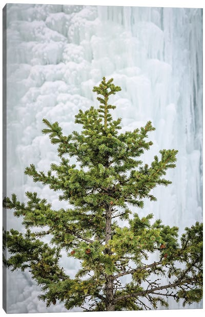 Pine At The Frozen Waterfall Canvas Art Print