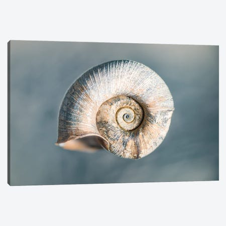 100 Years Of Shell Cyan Edition Canvas Print #NRV360} by Nik Rave Canvas Art Print