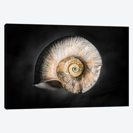 100 Years Of Shell Gold Edition Canvas Print #NRV361} by Nik Rave Art Print