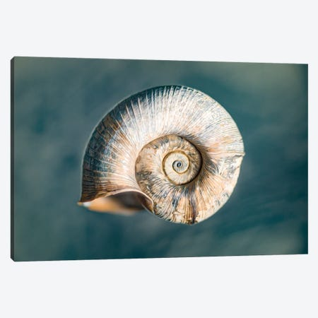 100 Years Of Shell Oceanic Edition Canvas Print #NRV362} by Nik Rave Art Print