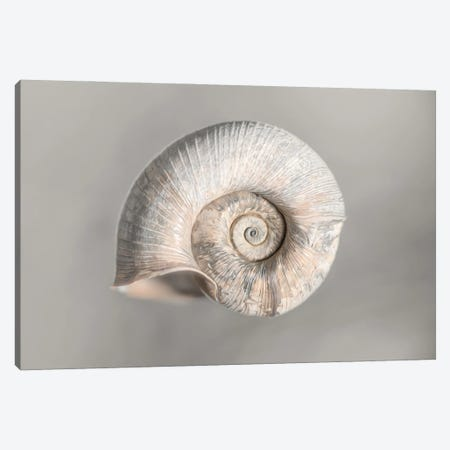 100 Years Of Shell Pearl Edition Canvas Print #NRV368} by Nik Rave Art Print