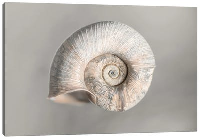 100 Years Of Shell Pearl Edition Canvas Art Print