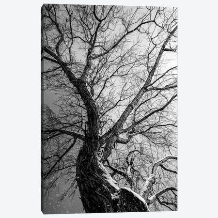 Epic Tree At Blizzard Dark Edition Canvas Print #NRV377} by Nik Rave Canvas Print