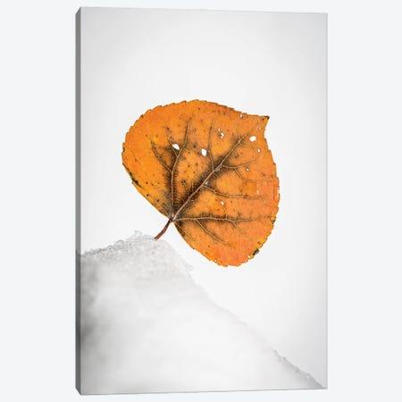 Orange Leaf On The Snowy Hill Canvas Print #NRV389} by Nik Rave Canvas Art Print