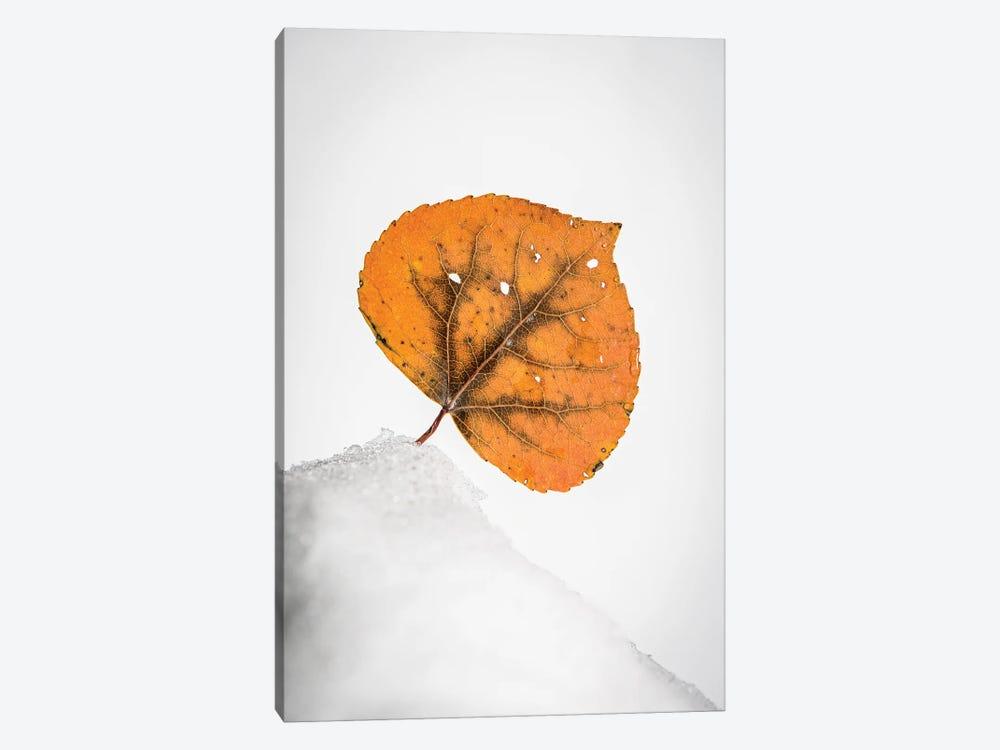 Orange Leaf On The Snowy Hill by Nik Rave 1-piece Art Print