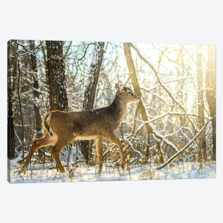Young Bambi Walking Towards The Sun On The Snow Canvas Print #NRV390} by Nik Rave Canvas Wall Art