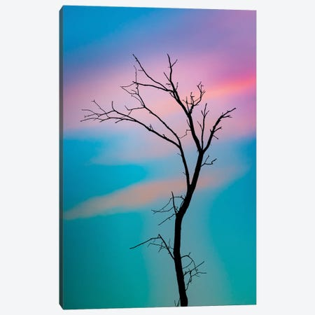 Cotton Candy Sky Tree Outline Canvas Print #NRV402} by Nik Rave Canvas Art