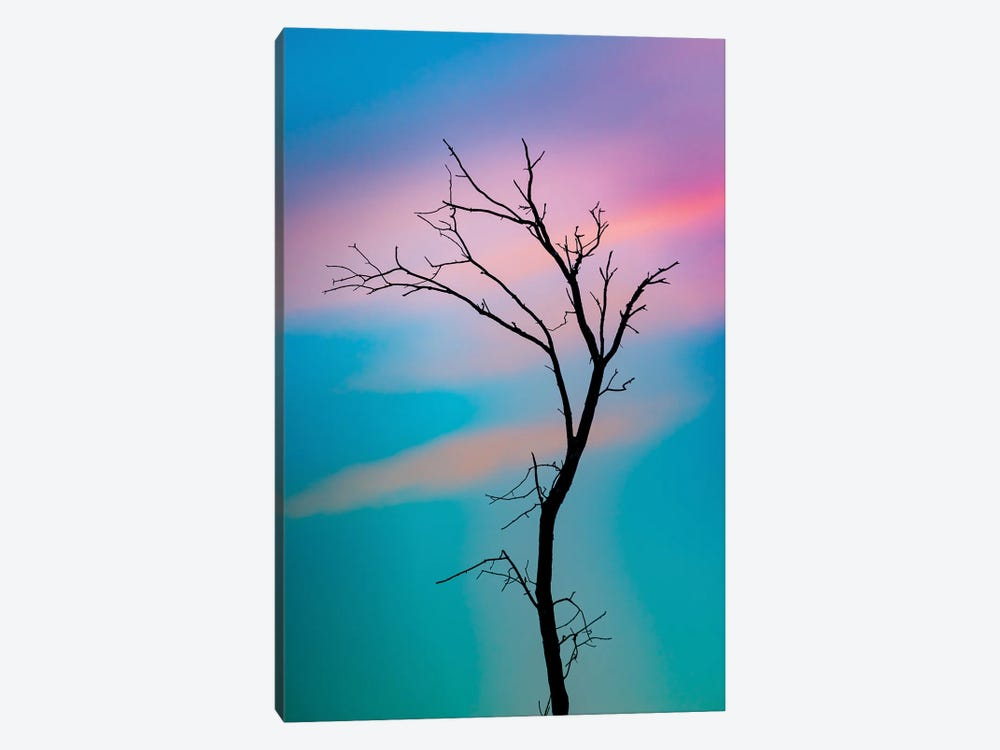 Cotton Candy Sky Tree Outline by Nik Rave 1-piece Canvas Art Print
