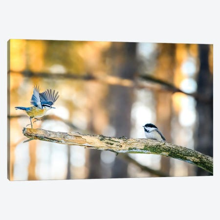 Dancing Little Birds At The Morning Canvas Print #NRV405} by Nik Rave Art Print