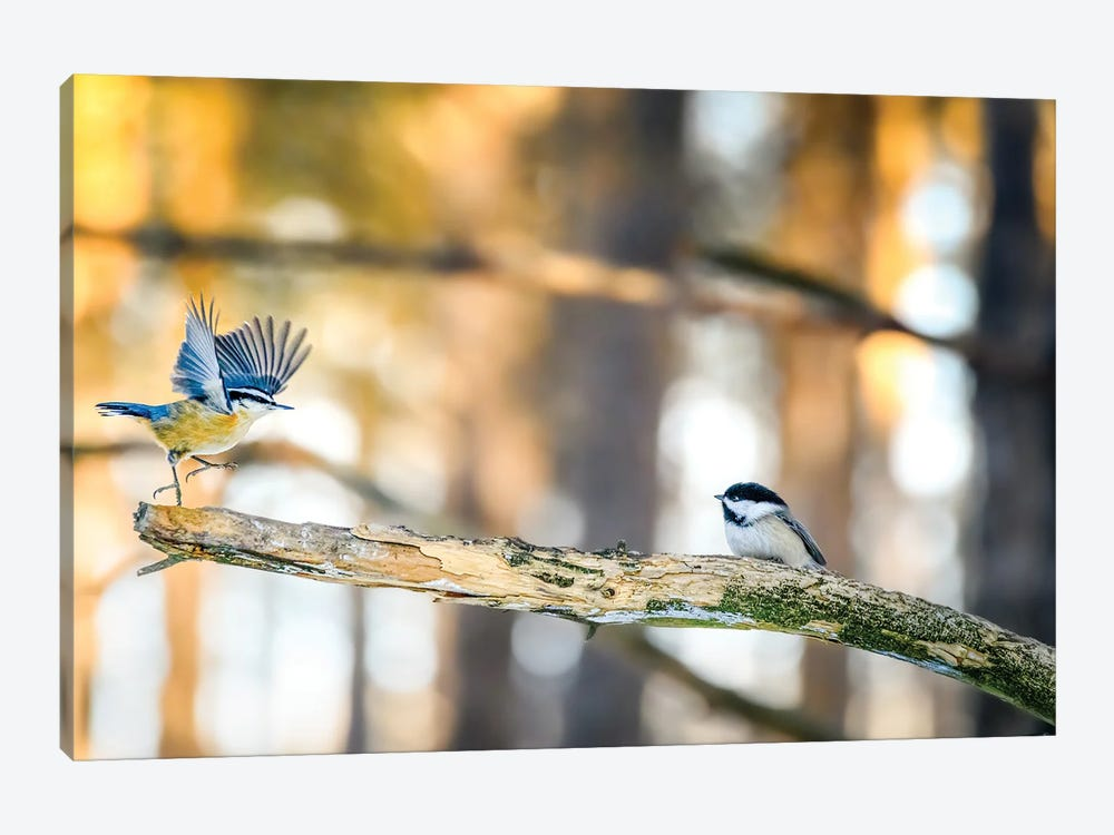 Dancing Little Birds At The Morning by Nik Rave 1-piece Canvas Art