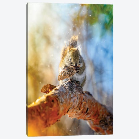 Golden Squirrel In A Light Of Morning Sun Canvas Print #NRV408} by Nik Rave Canvas Art