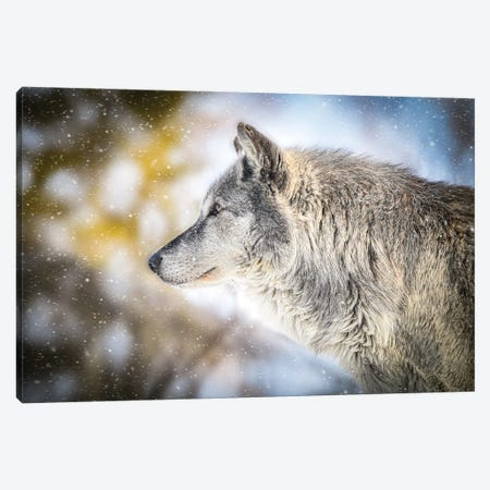 Gray Timberwolf In A Snowfall Canvas Print #NRV409} by Nik Rave Canvas Wall Art
