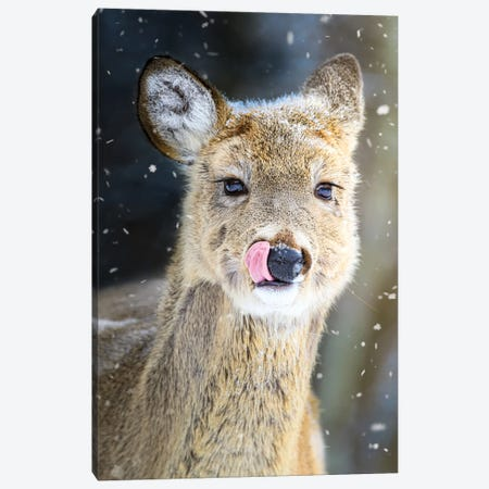 Portrait Of Fawn In Snowfall Canvas Print #NRV412} by Nik Rave Art Print