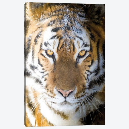 Sentinel Of The Forest Canvas Print #NRV415} by Nik Rave Canvas Artwork