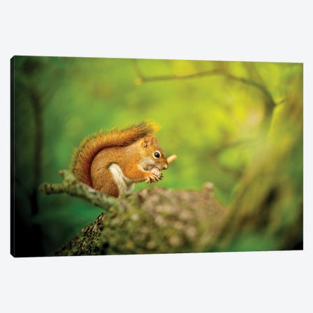 Squirrel In Epic Light Canvas Print #NRV419} by Nik Rave Art Print