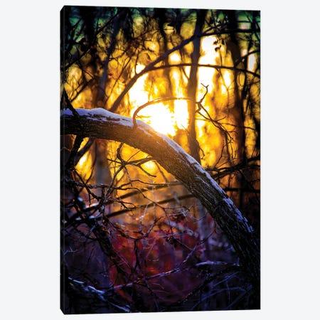 Sunset Through The Woodland Canvas Print #NRV420} by Nik Rave Canvas Art