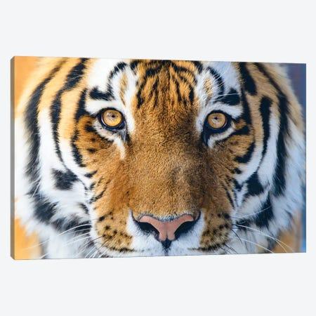 The Eyes Of Hunter Canvas Print #NRV423} by Nik Rave Canvas Artwork