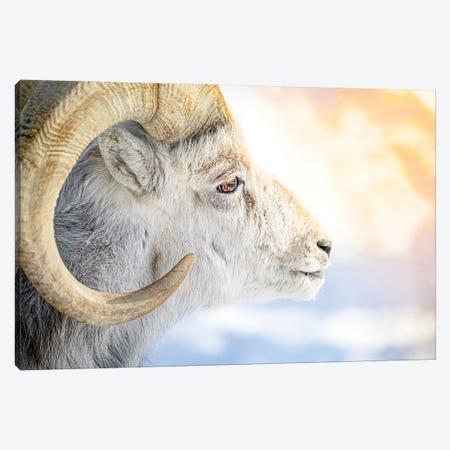 The Golden Fleece In A Light Of Sun Canvas Print #NRV424} by Nik Rave Canvas Art Print
