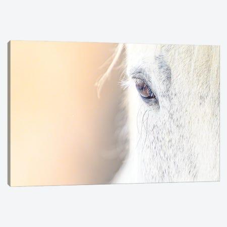 White Horse Minimalist Portrait In A Sun Light Canvas Print #NRV428} by Nik Rave Canvas Wall Art