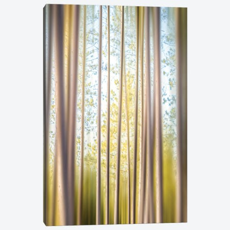 A Forest Of Illusions Canvas Print #NRV434} by Nik Rave Canvas Art