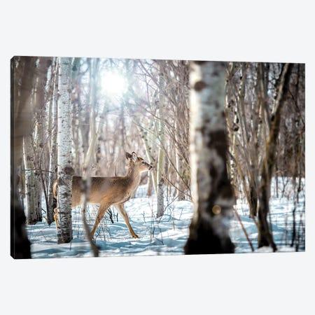 Baby Deer Walking On Snow Canvas Print #NRV44} by Nik Rave Art Print