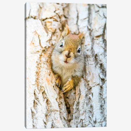 Cute Squirrel Mom Canvas Print #NRV450} by Nik Rave Canvas Art Print