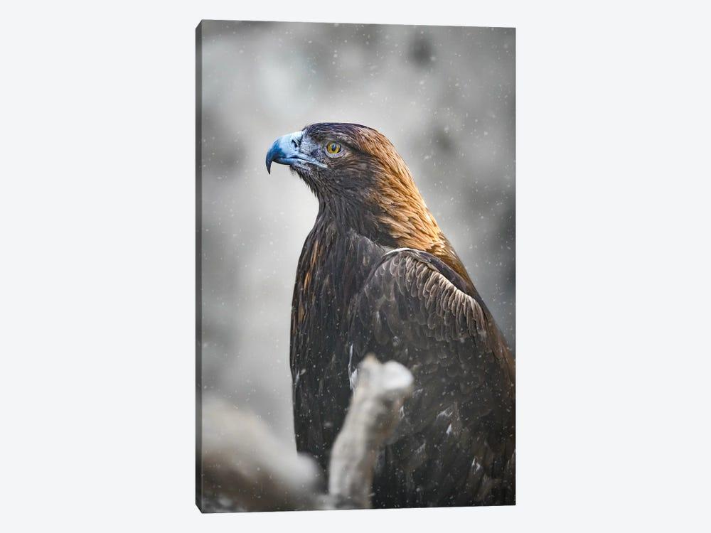 Golden Eagle by Nik Rave 1-piece Canvas Art